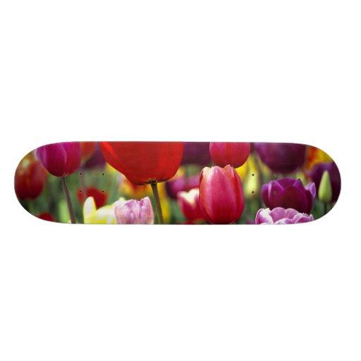 USA, Oregon, Willamette Valley. Beautiful Custom Skate Board