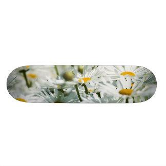 USA, Oregon, Willamette Valley, Selective Skate Decks