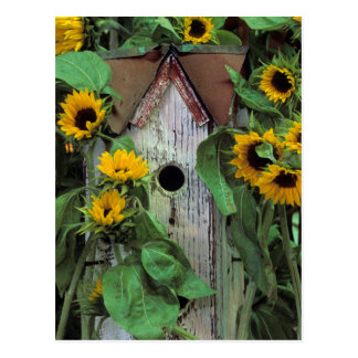 USA, Pennsylvania. Birdhouse and garden Postcard