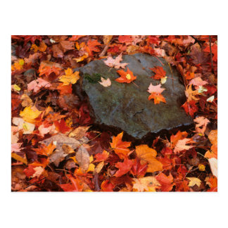 USA, Pennsylvania. Close-Up Of Forest Floor Postcard