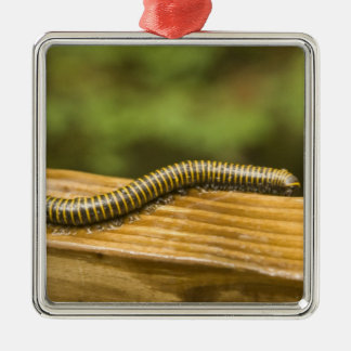 USA, Puerto Rico, Ponce. Millipede. Metal Ornament