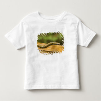 USA, Puerto Rico, Ponce. Millipede. T Shirt