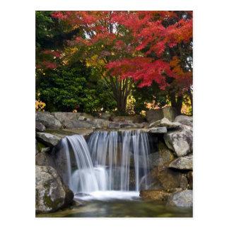 USA, Redmond, Washington. Fall color in a park. Postcard