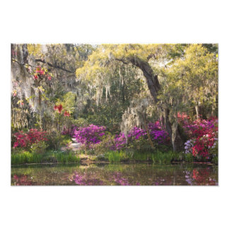 USA, South Carolina, Charleston. Cypress Trees 2 Art Photo
