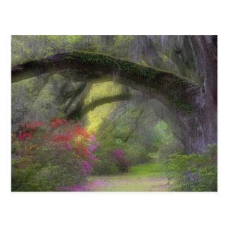 USA, South Carolina, Magnolia Gardens. Postcard