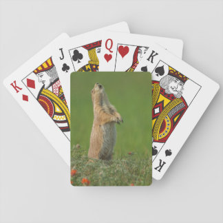 USA, South Dakota, Custer State Park Poker Deck
