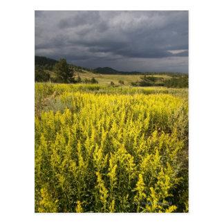 USA, South Dakota, Flowers and storm Postcard