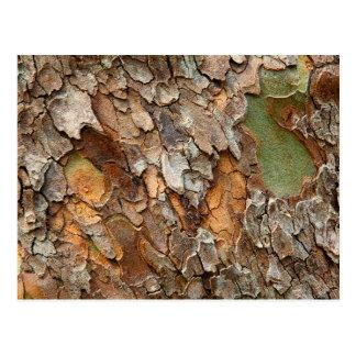 USA, Tennessee, Close Up Of Bark On A Tree Postcard