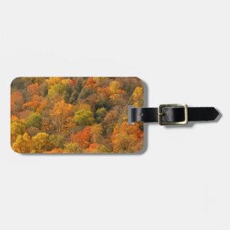 USA, Tennessee. Fall Foliage 2 Bag Tag