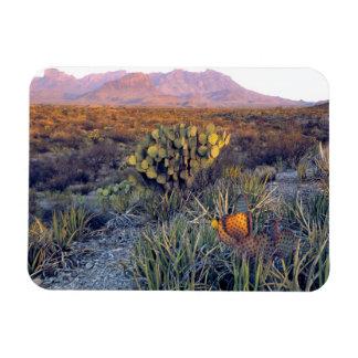 USA, Texas, Big Bend NP. A sandy pink dusk Magnet
