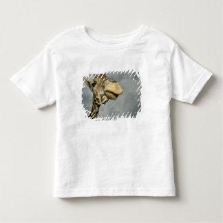 USA, Texas, Fossil Rim Wildlife Area, giraffe Shirts