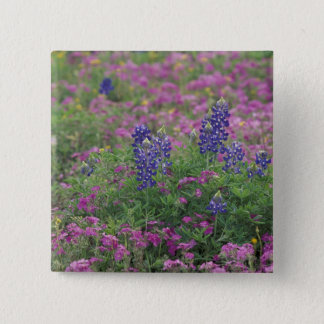 USA, Texas Hill Country. Bluebonnets among phlox 2 Inch Square Button