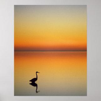 USA, Texas, Port Aransas, Great Blue Heron at Poster