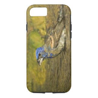 USA, Texas, Rio Grande Valley. Male blue iPhone 7 Case