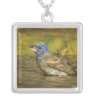 USA, Texas, Rio Grande Valley. Male blue Silver Plated Necklace