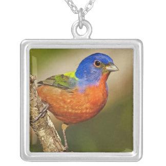 USA, Texas, Rio Grande Valley, McAllen. Male 2 Silver Plated Necklace