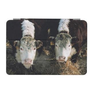 USA, Utah, Cache Valley, Hereford Steers iPad Mini Cover