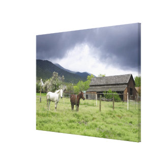 USA, Utah, Horses on ranch Canvas Print