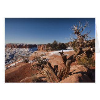 USA, Utah, Moab. Canyonlands National Park, Card