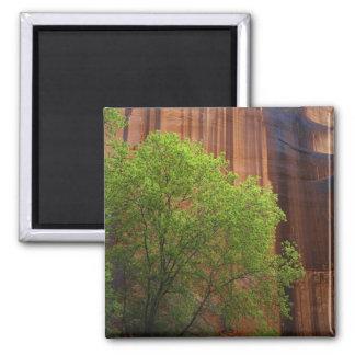 USA, Utah, Paria Canyon- Vermillion Cliffs Square Magnet