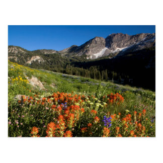 USA, Utah, Uinta-Wasatch-Cache National Forest Postcard