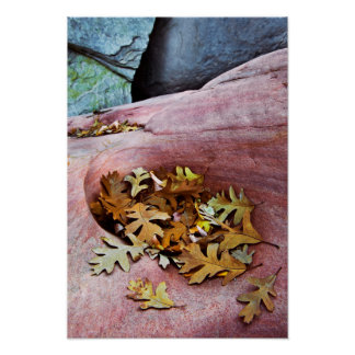 USA, Utah, Zion National Park. Gambel oak leaves Poster