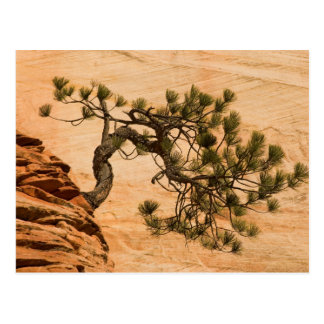 USA, Utah, Zion National Park. Pine tree Postcard