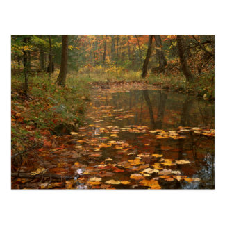 USA, Virginia, Autumn In Douthat State Park Postcard