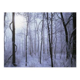 USA, Virginia, Richard Thompson Wildlife Area. Postcard