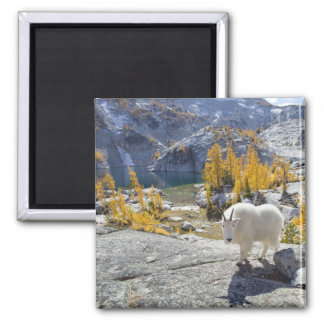 USA, WA, Alpine Lakes WIlderness Enchantments. Fridge Magnet