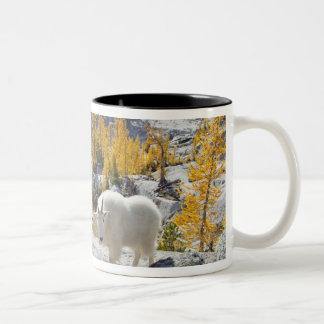 USA, WA, Alpine Lakes WIlderness Enchantments. Coffee Mug