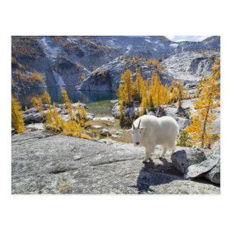 USA, WA, Alpine Lakes WIlderness Enchantments. Postcard