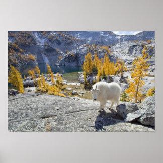 USA, WA, Alpine Lakes WIlderness Enchantments. Print