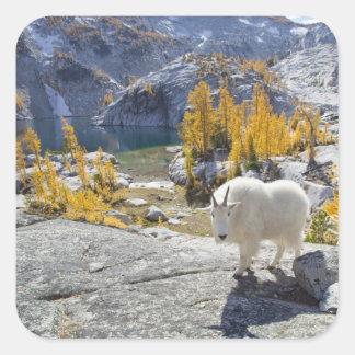 USA, WA, Alpine Lakes WIlderness Enchantments. Square Sticker