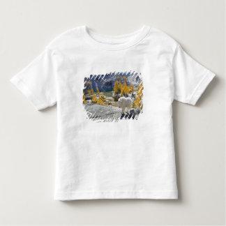 USA, WA, Alpine Lakes WIlderness Enchantments. Tee Shirt