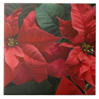 USA, WA, Red Poinsettia Detail (Euphorbia Ceramic Tiles