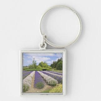 USA, WA, Sequim, Purple Haze Lavender Farm Key Chains