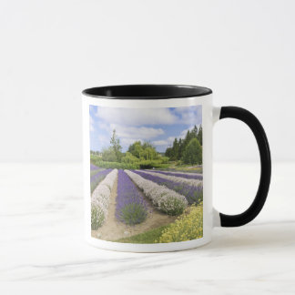 USA, WA, Sequim, Purple Haze Lavender Farm Mug