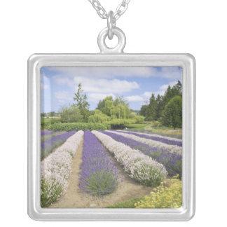 USA, WA, Sequim, Purple Haze Lavender Farm Silver Plated Necklace
