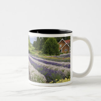 USA, WA, Sequim, Purple Haze Lavender Farm Two-Tone Coffee Mug