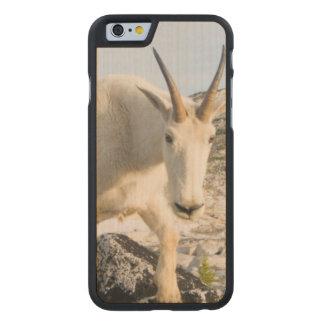 USA, Washington, Cascade Range 3 Carved® Maple iPhone 6 Slim Case