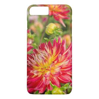 USA, Washington. Dahlia Flowers In Garden iPhone 7 Plus Case