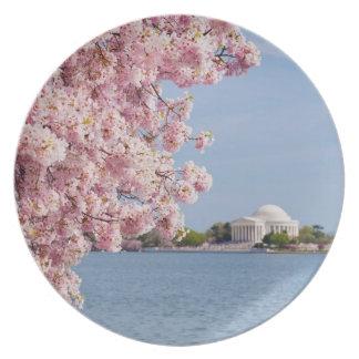 USA, Washington DC, Cherry tree Dinner Plates