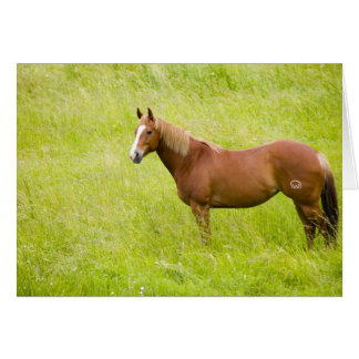 USA, Washington, Horse in Spring Field, 2 Card