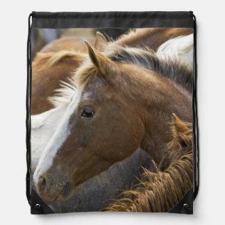 USA, Washington, Malaga, Horse head profile in Backpack