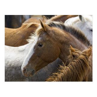 USA, Washington, Malaga, Horse head profile in Postcard
