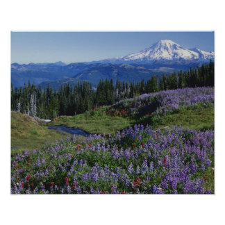 USA, Washington Mt. Adams Wilderness, Meadows Poster