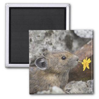 USA, Washington, North Cascades National Park, Square Magnet