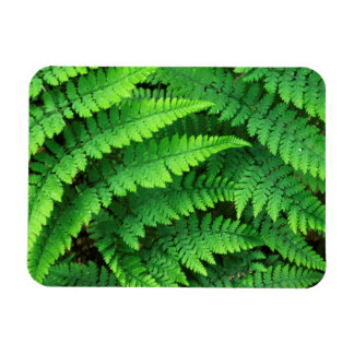 USA, Washington, Olympic National Park, Athyrium Rectangular Photo Magnet
