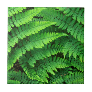 USA, Washington, Olympic National Park, Athyrium Tile